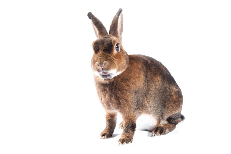 Lief bruin konijn met grote oren