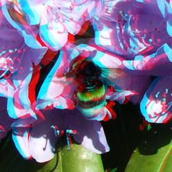 Bij op Rhododendron 3D