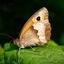 butterfly1275