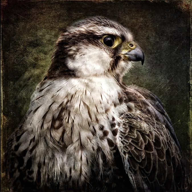Bird Of Prey - Bird Of Prey