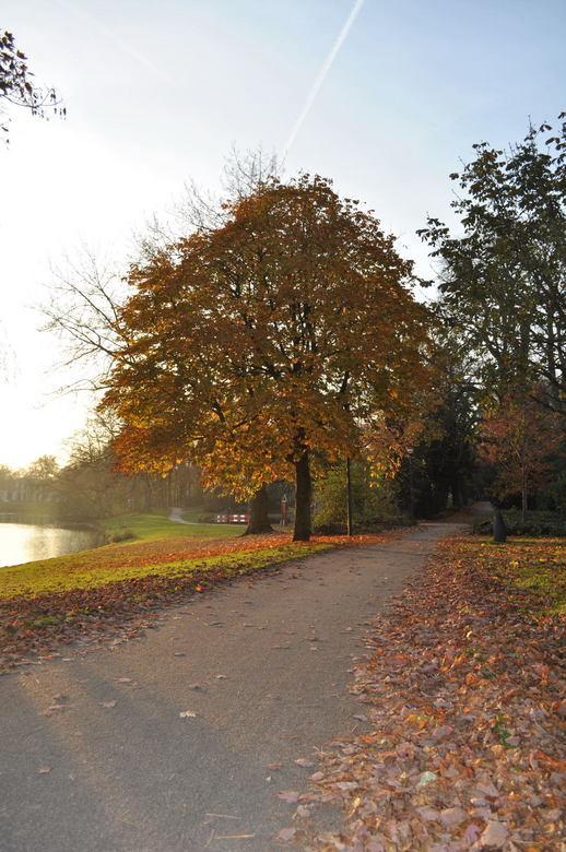 Herfst impressie - Herfst met een mooie zon