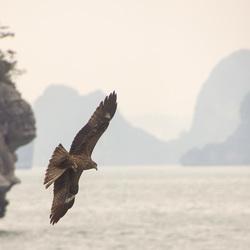 Vietnam Bai Tu Long bay
