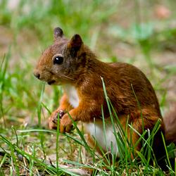 ijverige eekhoorn
