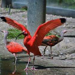 Ouwehands dierenpark (12)