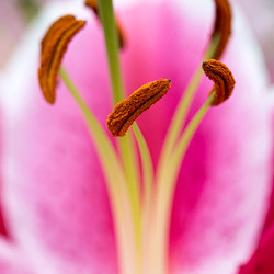 Macrofotografie bloem