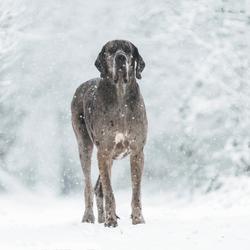 Ninjo in de sneeuw
