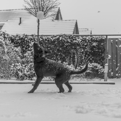 Full focus on the snowball