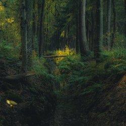 Donker herfst bos