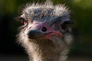 Wanna dance? - Struisvogels in Blijdorp, erg grappig. Vroeger toen ik in R'dam woonde, had ik een abonnement op de dierentuin, en op stille dagen