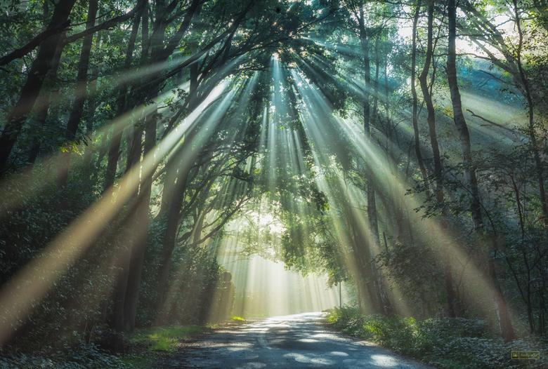 Spread The Light - Vanmorgen op pad geweest om heide te fotograferen. Daarna nog even een stukje het bos in geweest. Dat was niet zonder resultaat...