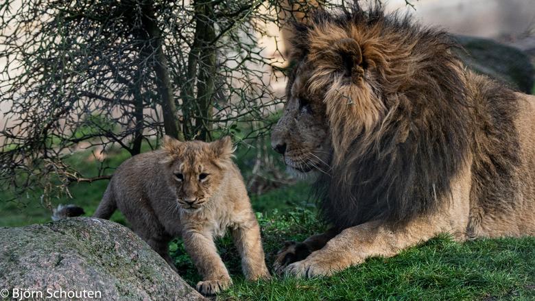 Papa waakt over dochter  - Vader waakt over dochter <br /> En wat zal ze gaan doen spellen <br /> Wie zal het zegen