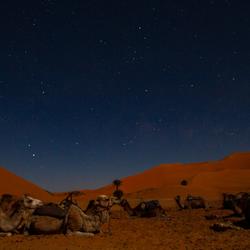 Sahara bij nacht