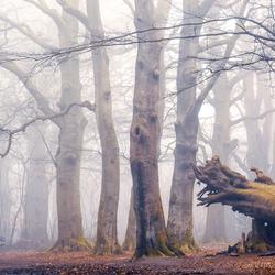 De bomenwereld