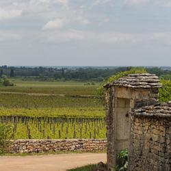 Meursault - Côte-d'Or - Bourgogne