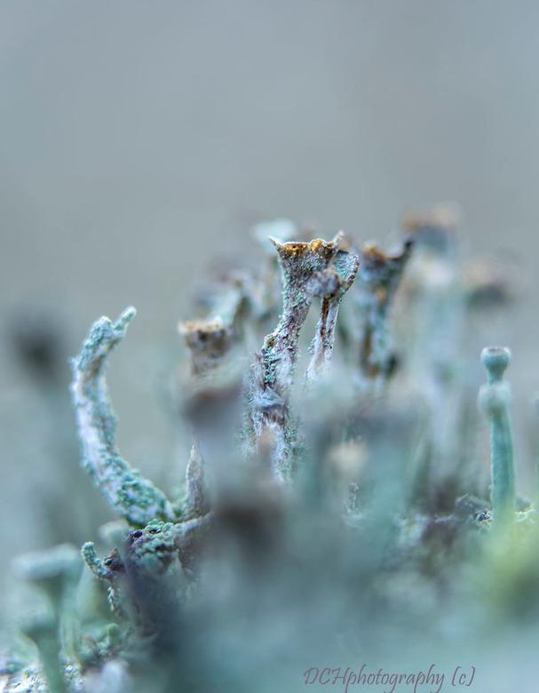 Met zijn allen - Vandaag een gezellige ochtend gehad met Birgitte (birgitte61) in Meijendel (Wassenaar) op zoek naar ijskristallen van afgelopen nacht