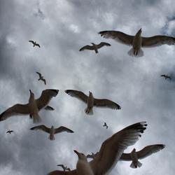Bewerking: Birds