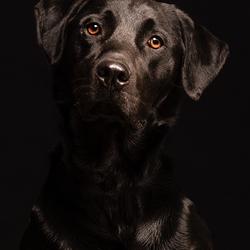 Hond Diesel in de fotostudio