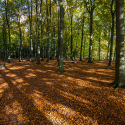Het Haagse herfstbos, shadows