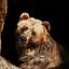 de Russische bruine beer komt eraan..............