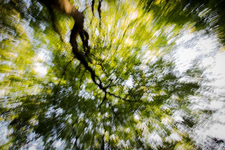 Flashing tree -
