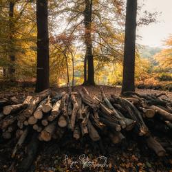 Symmetrisch herfst bos