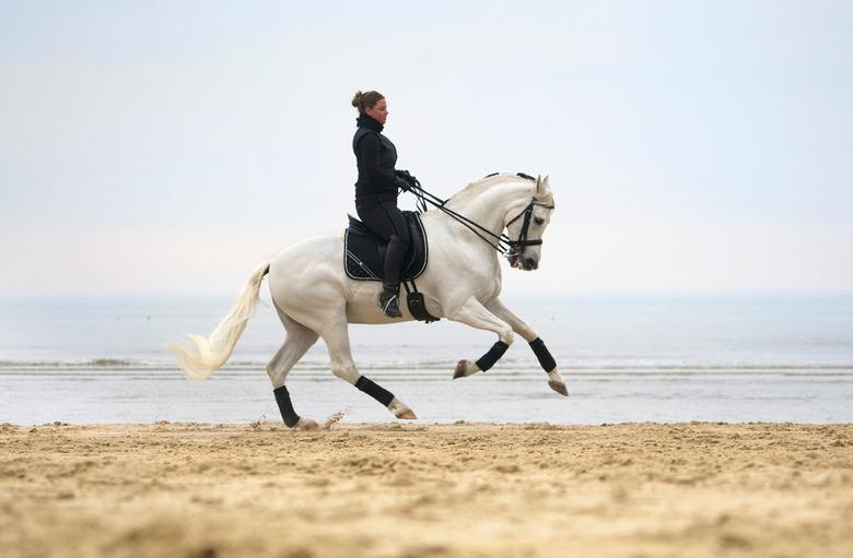 Paard strand actie -