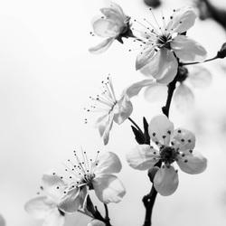 lente in het zwart-wit