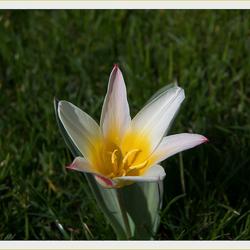 Lente 11