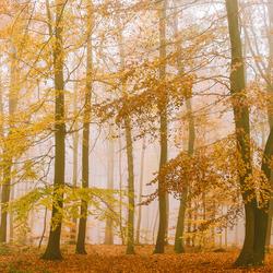 warme mist