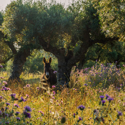 sprookjesachtige olijfboomgaard
