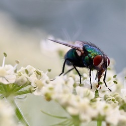 colorful fly