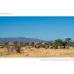 Northern Oryx, Kenia