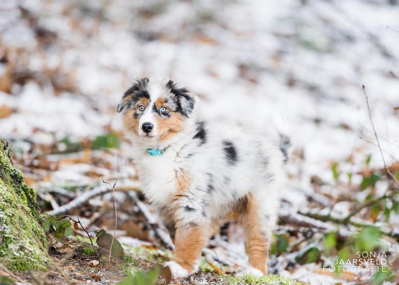"""Camouflage - ..Heerlijk...Het bos in met mn pup. Hij heeft best een opvallende vacht maar soms heeft hij de perfecte schutkleur <img  src=""""/images/smi"""