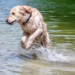 Spelende hond in het water