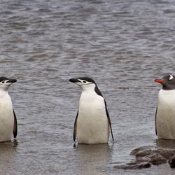Antarctica - What's he doing here...?