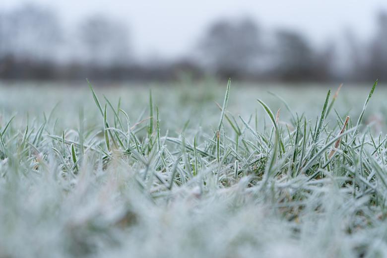Winter - Door stil te staan en echt te kijken, lijkt iets 'gewoons' als gras soms ineens een stuk specialer.