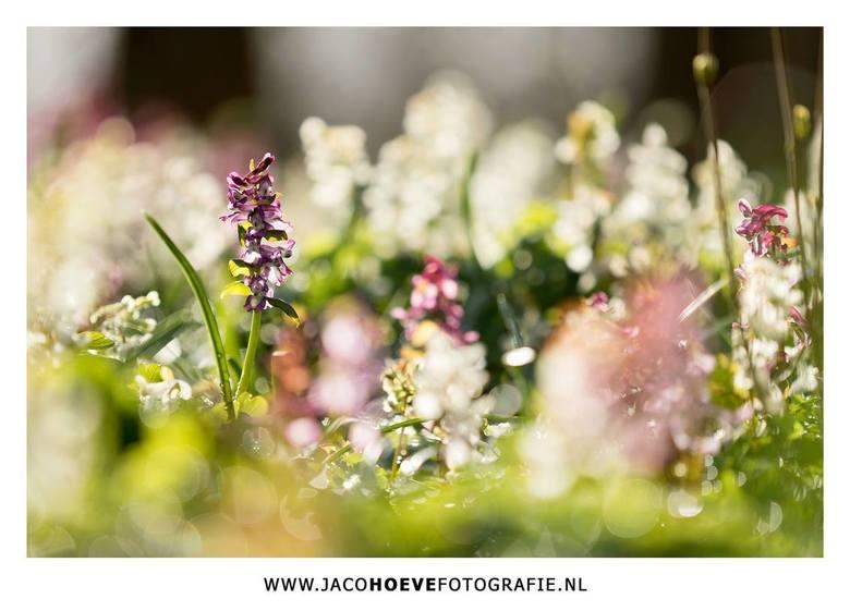 Lentegevoel... - De lente breekt door op het landgoed Dickninge in De Wijk.