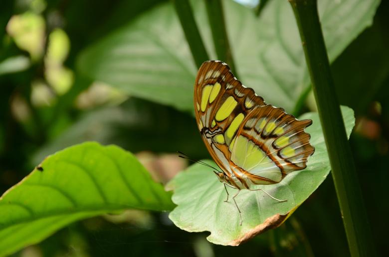 Een vlinder in de spotlight - Deze foto heb ik genomen een vlindertuin in Costa Rica.