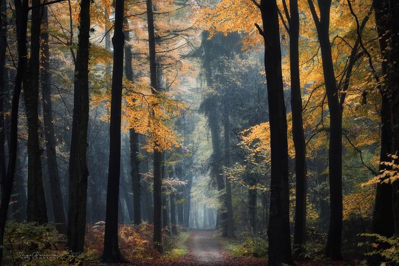 Foliage in Fall. -