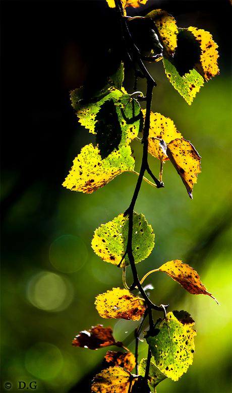 Colour me - Herfst 2010<br /> <br /> Bekijk de grote versie!<br /> <br /> De foto spreekt hopelijk voor zich.<br /> Ik zag &#039;m hangen in &#03