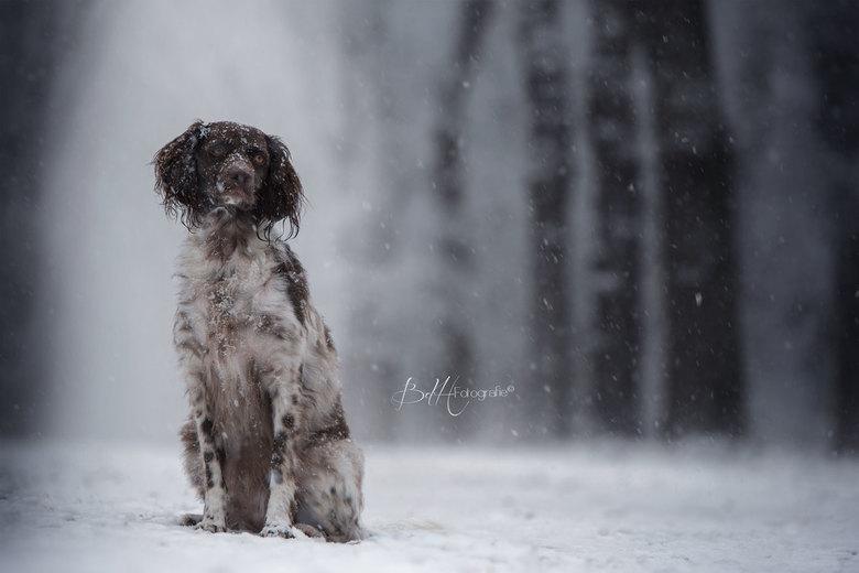 Winter Wonderland - Op een winterse dag in december. Het bleef maar sneeuwen... zo mooi!
