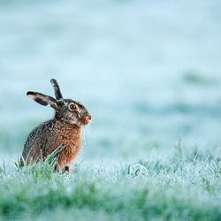 Koud in het veld...