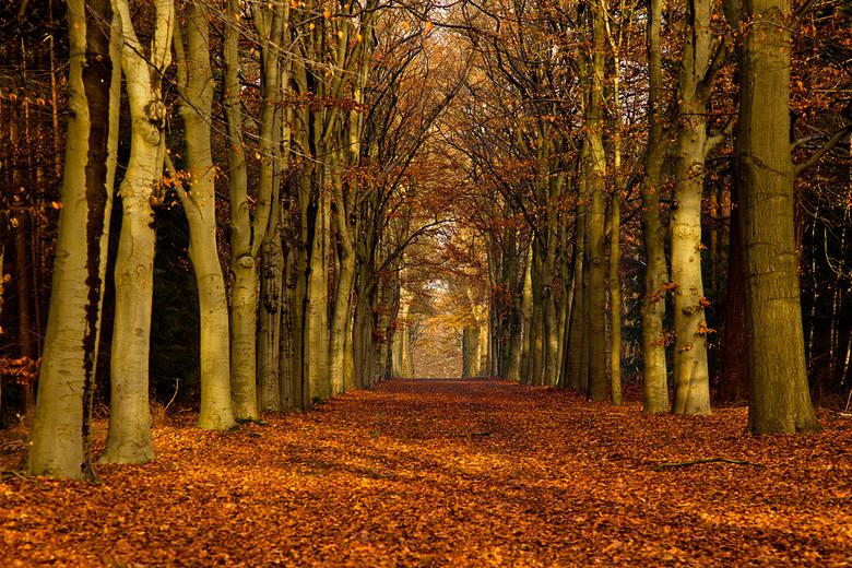 Herfst - Herst, Oude Warande, Tilburg