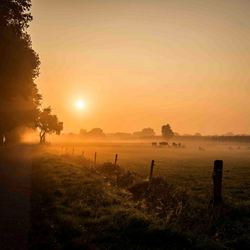 Ochtend mist 2