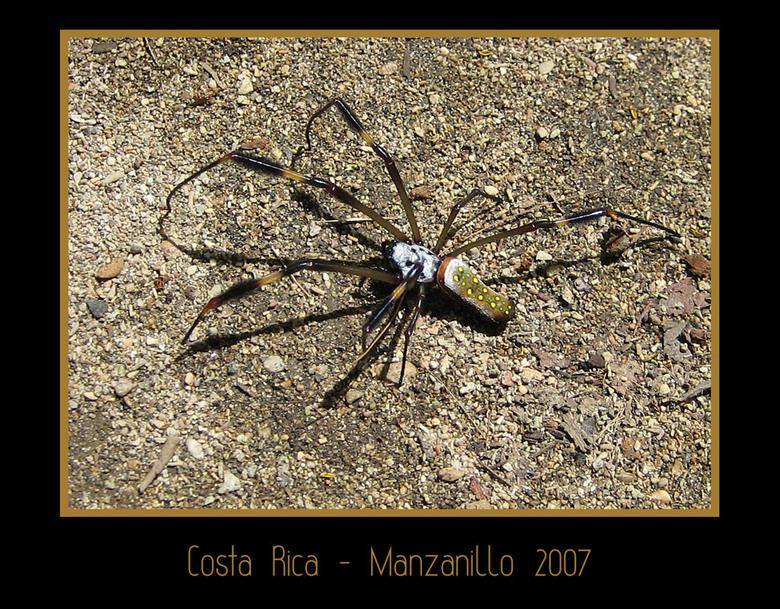 Arme spin - Tijdens onze jungle walk in Manzanillo, Costa Rica, liep een vriend van me in een spinnenweb. Op zich niet zo heel erg, alleen erg vies, m