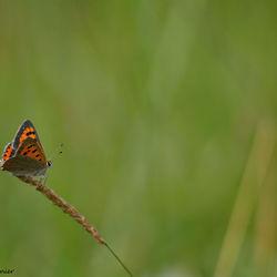 Vlinderrijke vrijdag