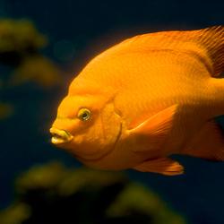 Nederlandse vis?