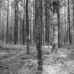 Door de bomen het bos niet zien..