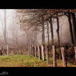 Rustplek in het bos.