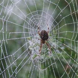 Spinnenweb met dauwdruppeltjes